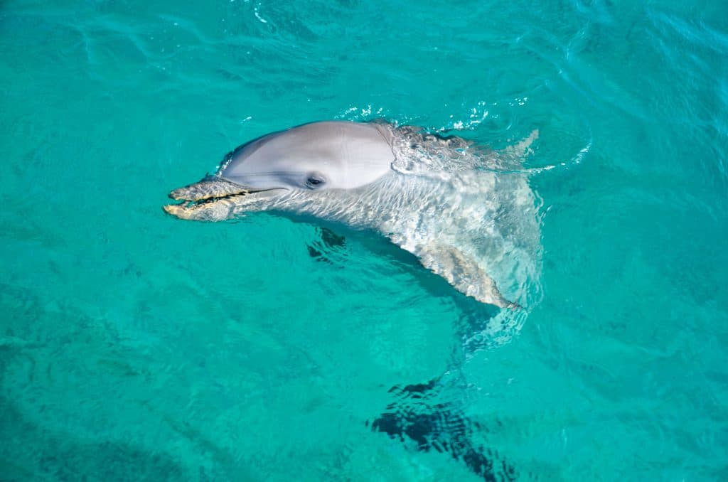 where is Curacao Sea Aquarium Fendaux
