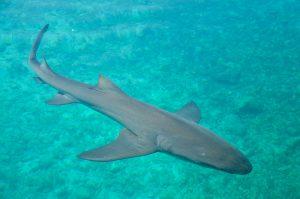 Curaçao marino acuario