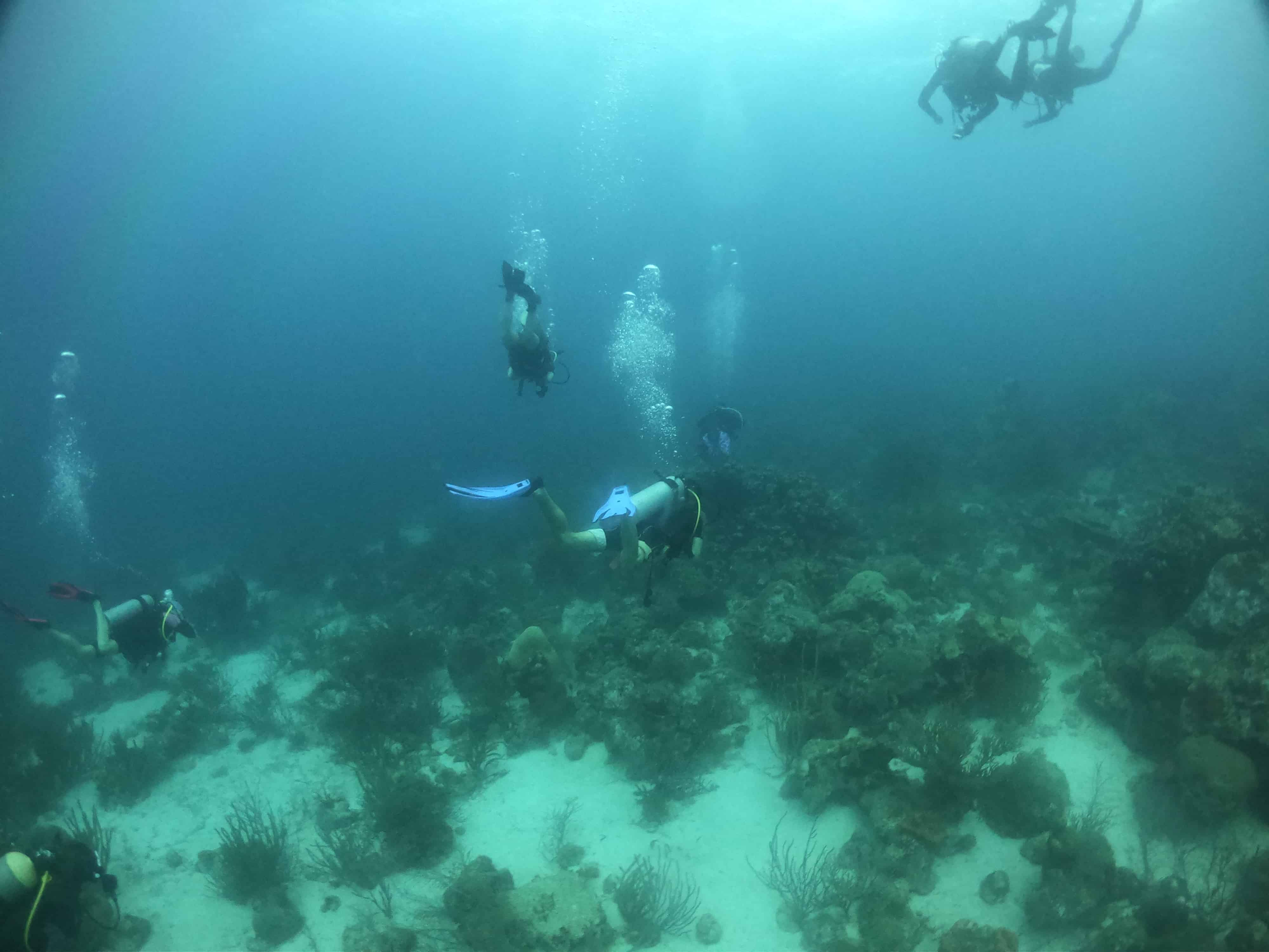 Where are the best wreck dives